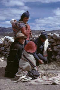 Pucuhuaranga family showing me maca, Dept. of Junín, Peru, 1973.  Credit: Michael F. Brown. (CC BY-NC-ND 4.0)